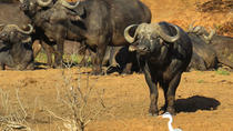 11 Days Botswana Northern Experience (Accommodated), Maun, Multi-day Tours