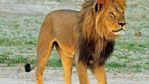 14 Days Wonderful Safari in Namibia, Botswana, and Zimbabwe (Camping and Lodging), Windhoek, Hiking...
