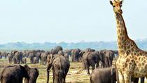 2 Days Etosha wildlife Safari-Namibia (Camping), Windhoek, Hiking & Camping