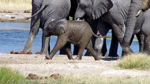 3 Days Etosha Wildife Safari-Namibia (Accommodated), Windhoek, 4WD, ATV & Off-Road Tours