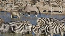 3 Days Etosha Wildlife Safari (Camping), Windhoek, Hiking & Camping