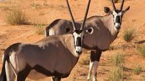 4 Day Swakopmund & Sossusvlei Activity Safari - Namibia (Accomodated), Windhoek, Multi-day Tours