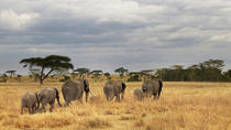 6 day Okavango and Moremi Adventure Safari-Botswana (Camping), Maun, 4WD, ATV & Off-Road Tours