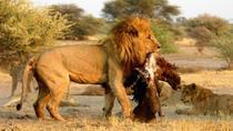 6 Days Wildlife Etosha and Sossusvlei Namibian Safari (Accommodated), Windhoek, Multi-day Tours