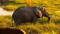 7 Days Extreme Safari Botswana (Accomodated), Maun, Multi-day Tours