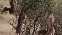 7 Tage Wildes Leben Safari - Namibia (Camping), Windhoek, Hiking & Camping
