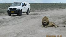 Windhoek-Etosha Park ( Okaukuejo, Toshari Inn, Ongava lodges) or vice versa Transfer (Namibia),...