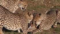 Windhoek To Harnas Wildlife Foundation- Transfer (Namibia), Windhoek, Airport & Ground Transfers