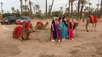 SUNSET CAMEL RIDE IN MARRAKECH PALM GROVE, Marrakech, Nature & Wildlife