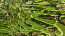 Bali Global Tour: Rice Terrace the Sacred Monkey Forest and Volcano Including Lunch, Ubud, ...