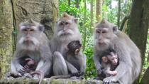 Bali Sightseeing Tours and Ubud Waterfall, Ubud, Attraction Tickets