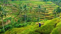 Best Of Bali Traditional Village Sightseeing Tour With Lunch 3 - 4 Person, Ubud, Cultural Tours