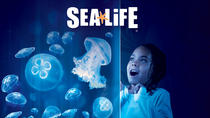 SEA LIFE Charlotte Concord Aquarium Admission, Charlotte, Attraction Tickets