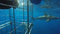 Shark Cage Diving on Durban's Aliwal Shoal, Durban, 4WD, ATV & Off-Road Tours
