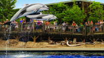 Vancouver Aquarium Admission, Vancouver, Attraction Tickets
