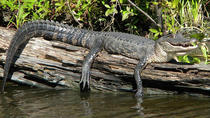 VIP City to the Swamp Tour, New Orleans, Private Sightseeing Tours