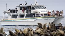Phillip Island Seal-Watching Cruise, Phillip Island, Dolphin & Whale Watching