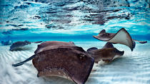Stingray City and Coral Gardens Snorkeling Tour, Cayman Islands, Snorkeling