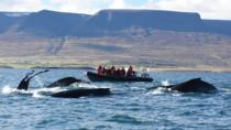 Small-Group Whale Watching from Akureyri, Akureyri, Dolphin & Whale Watching