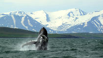 Whale Watching and White-Water Rafting from Akureyri, Akureyri, Dolphin & Whale Watching