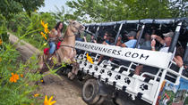 Dominican Republic Countryside Safari Tour from Punta Cana, Punta Cana, Day Trips