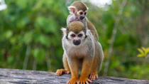 Monkeyland and Plantation Safari from La Romana, La Romana, Plantation Tours