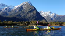 Sunriser Classic Sea Kayaking Trip from Milford Sound, Fiordland & Milford Sound, Kayaking & ...