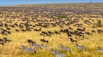 3 Days Masai Mara Budget Camping Safari, Nairobi, Hiking & Camping