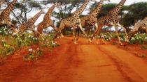 Naivasha Full Day Safari, Nairobi, Multi-day Tours
