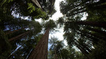 Combo Tour: Muir Woods and Sausalito and Wine Country, San Francisco, Half-day Tours