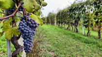 Half-Day Wine Country Tour, San Francisco, Day Trips