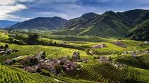 Wine tour & tasting in Prosecco Land, Treviso, Wine Tasting & Winery Tours