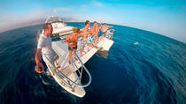 Luxury Small Group Catamaran Trip with Whale & Dolphins Watching, Food & Drinks & Transfers,...