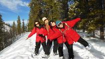 Half-Day Yukon Snowshoeing Adventure, Whitehorse, Fishing Charters & Tours
