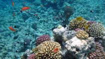 Giftun Island Budget Snorkeling Trip from Hurghada, Hurghada, Day Cruises