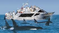 Whale Watching Marine Wildlife Excursion from Victoria, Victoria, Dolphin & Whale Watching