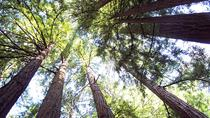 Muir Woods Tour of California Coastal Redwoods, San Francisco, Bus & Minivan Tours