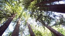 Muir Woods Tour with San Francisco Zoo Admission