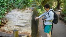 Nature Lovers Experience - California's Redwoods with Aquarium Visit, San Francisco, Half-day Tours