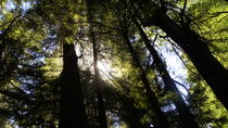 Private Tour of Muir Woods from San Francisco in Mercedes Van, San Francisco, Private Sightseeing ...