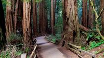 Shore Excursion: Coastal Redwoods and San Francisco Hop-On Hop-Off Tour, San Francisco, Ports of ...