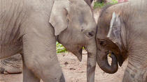 Full Day Elephant Nature Park Exploration from Chiang Mai, Chiang Mai, null