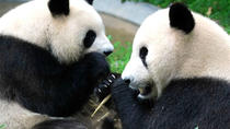 Full-Day Private Chengdu and Giant Panda Breeding Center Tour, Chengdu, Private Sightseeing Tours