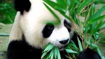Full-Day Private Chengdu Giant Panda Breeding Center, Local Life Experience, Chengdu, Private...