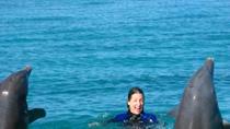 Open Ocean Dolphin Swim in Freeport, Freeport, Swim with Dolphins