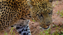 3 Days 2 Nights Group Safari in the Mara, Nairobi, 4WD, ATV & Off-Road Tours