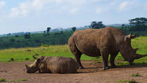 Worlds Wildlife Capital - Nairobi National Park, Nairobi, Attraction Tickets