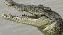 Crocodiles Park Ticket With Transfers, Agadir, 4WD, ATV & Off-Road Tours