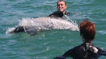 Akaroa Dolphin Swimming & Alpaca Farm Tour From Christchurch, Christchurch, Day Trips