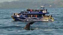 Private Kaikoura Day Tour Including Whale Watching, Christchurch, Day Trips